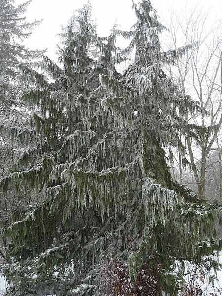 Dec1-2012Hoarfrost29