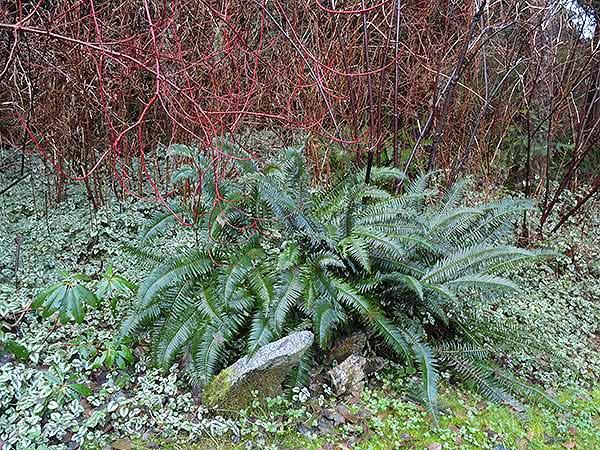 End-of-year-garden--Quadra-007b